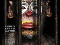 13-animal-clown-photo-manipulation
