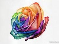 2-rose-flower-drawing