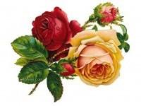 3-rose-flower-drawing