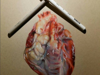 Heart Color Pencil Drawing by Miguel Santiago