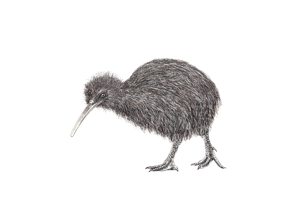 bird scientific illustration by illustraciencia