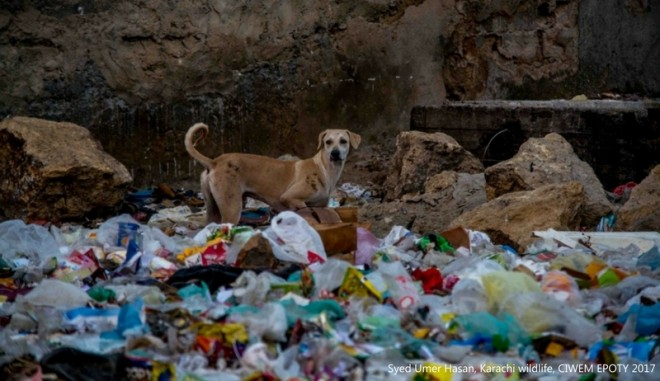 karachi wildlife environment photography