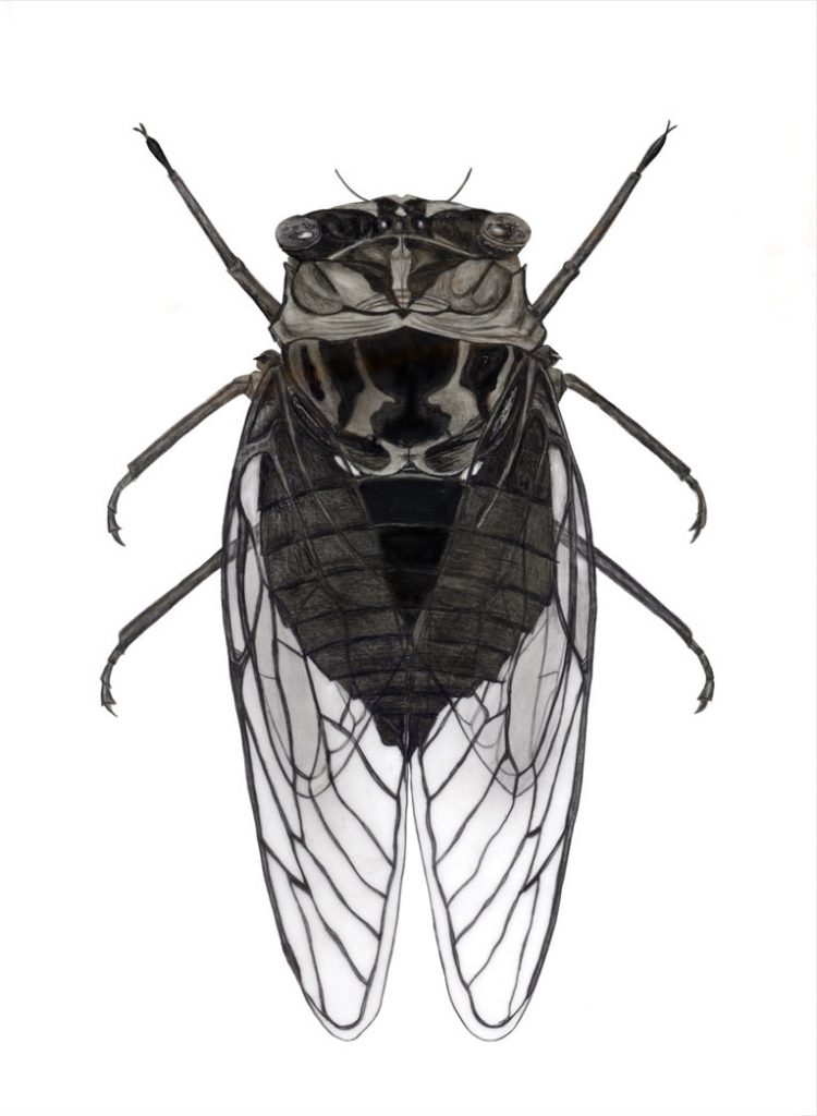 fly scientific drawing by finn