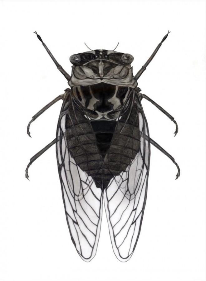 fly scientific drawing by finn