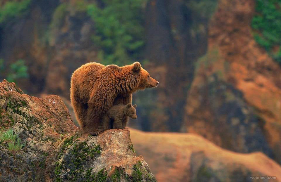 wildlife photography bear by arankadelina