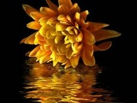 11-best-yellow-themed-photography