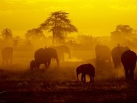 21-best-yellow-themed-photography