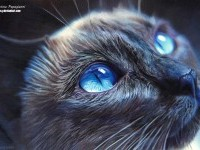 21-cat-hyper-realistic-color-pencil-drawing-by-christina-papagianni