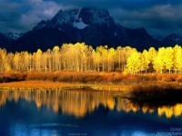 22-best-yellow-themed-photography