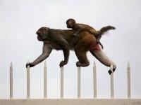 23-inspiring-photograph-monkey