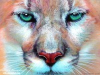 23-lion-hyper-realistic-color-pencil-drawing-by-christina-papagianni