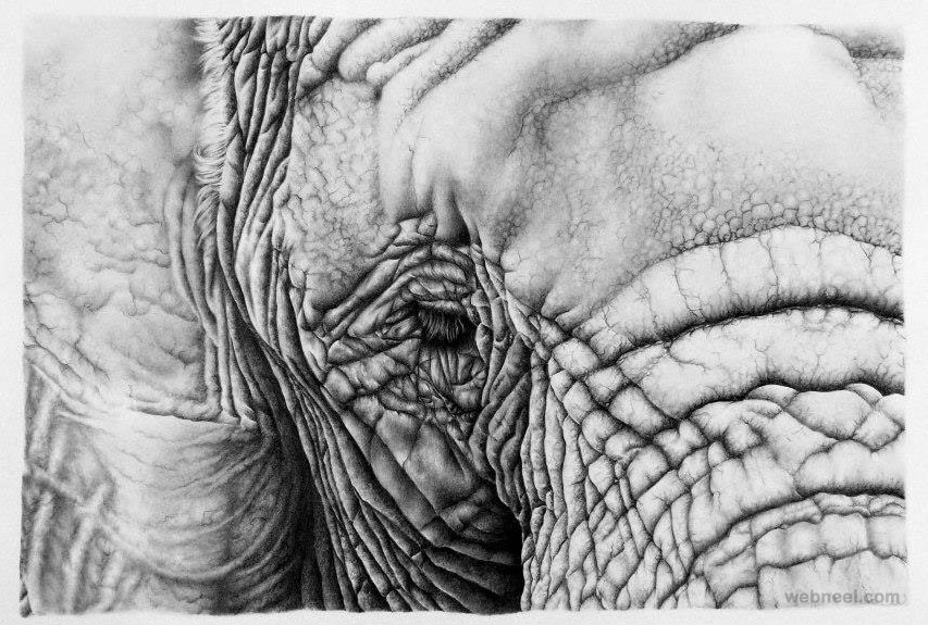 elephant realistic pencil drawing