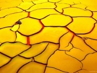 3-best-yellow-themed-photography