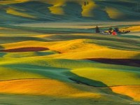 6-best-yellow-themed-photography