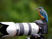 photographer waiting