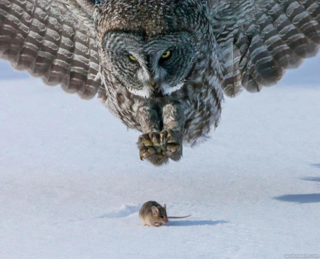 predator vs prey