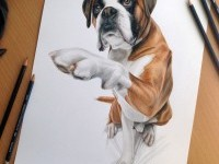 1-dog-color-pencil-drawing-by-dinotomic