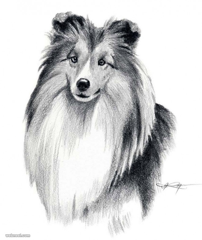 dog art drawing