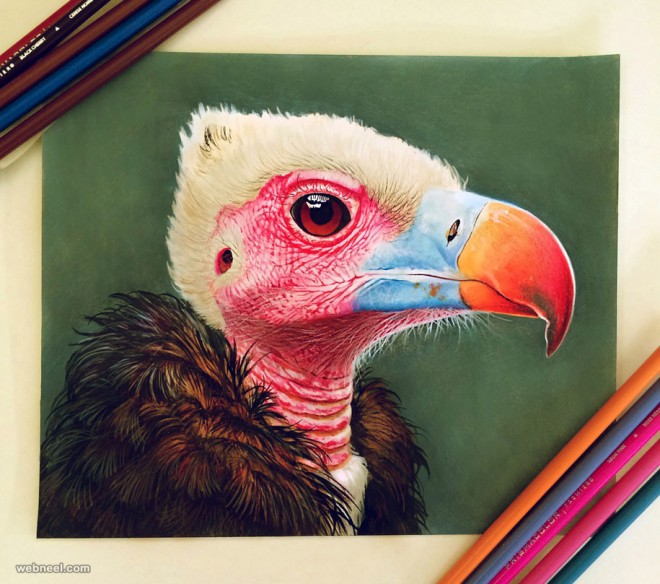 color pencil drawing by morgan davidson