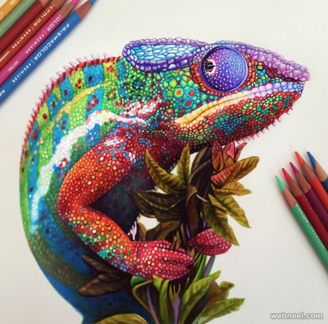 Chameleon color pencil drawing