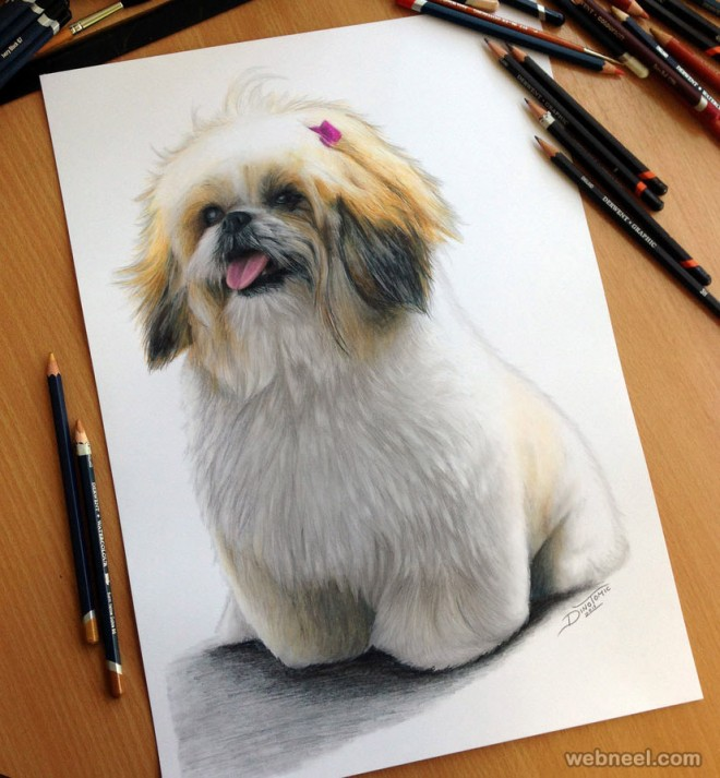 dog color pencil drawing by dinotomic