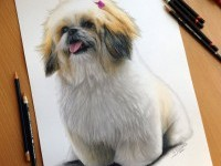 3-dog-color-pencil-drawing-by-dinotomic