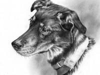 5-dog-drawing-by-taran