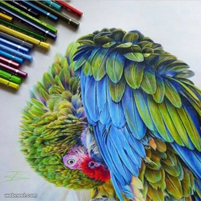 bird color pencil drawing by tattootatiana