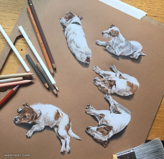 dog color pencil drawing by willow