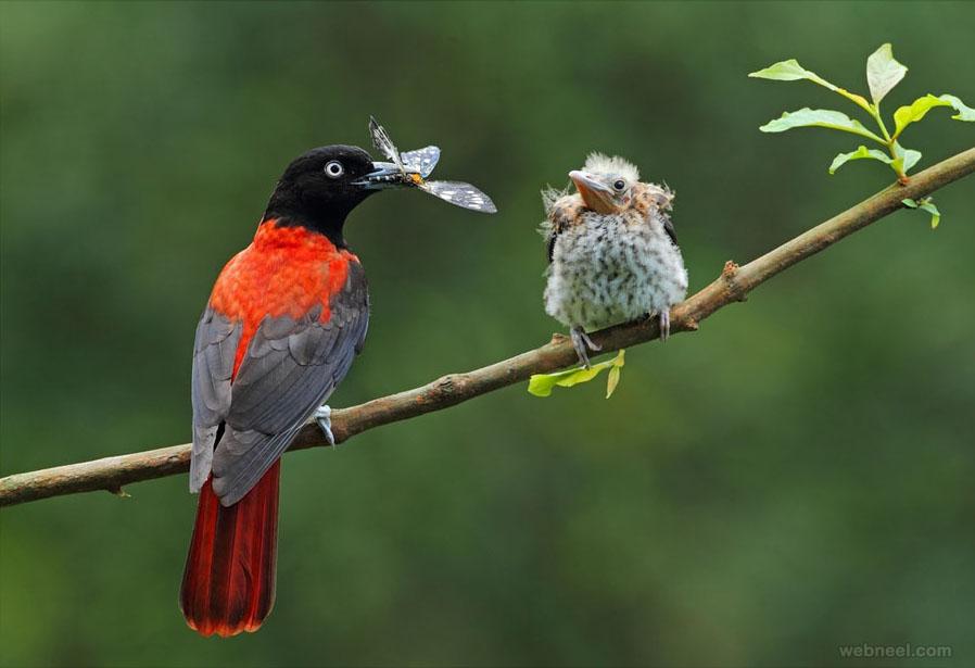 bird hotography photo