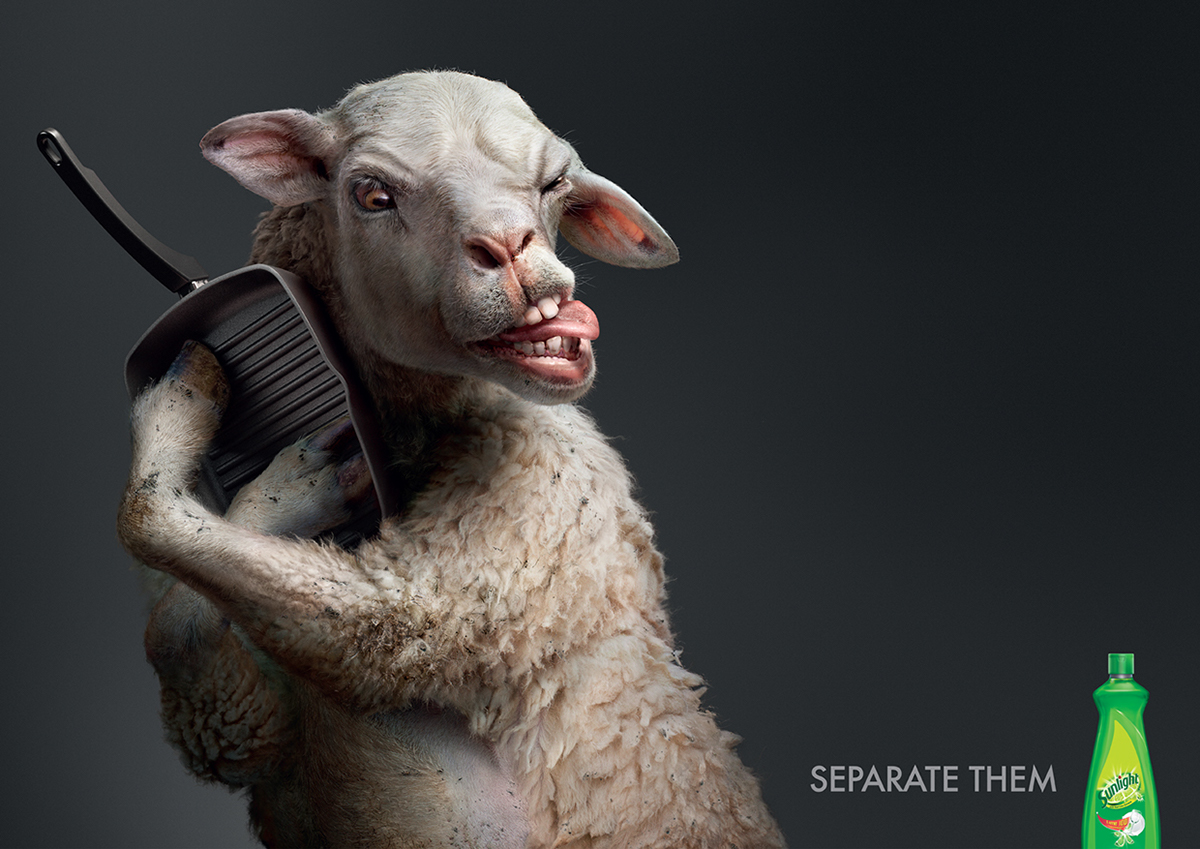 photo manipulation animal advertising idea sunlight