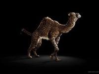 28-animal-photo-manipulaiton-by-dimitri