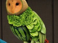 1-healthy-owl-photo-manipulation-by-romolina