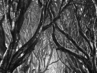 2-tree-black-and-white-photography-by-stephen-emerson