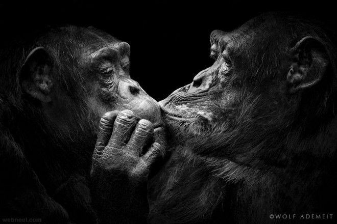 animal kissing black and white photography by wolf ademeit