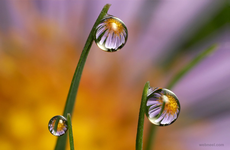 water droplet photography reflected - photo #6