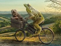 26-frog-takes-toad-for-a-ride-photo-manipulation-by-shmeil