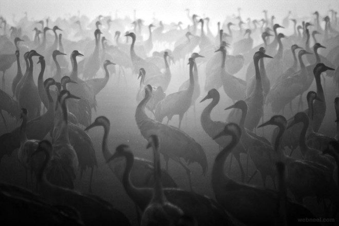 birds black and white photography by cohen
