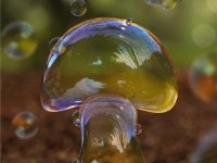3-water-mushroom-photo-manipulation-by-brunosousa