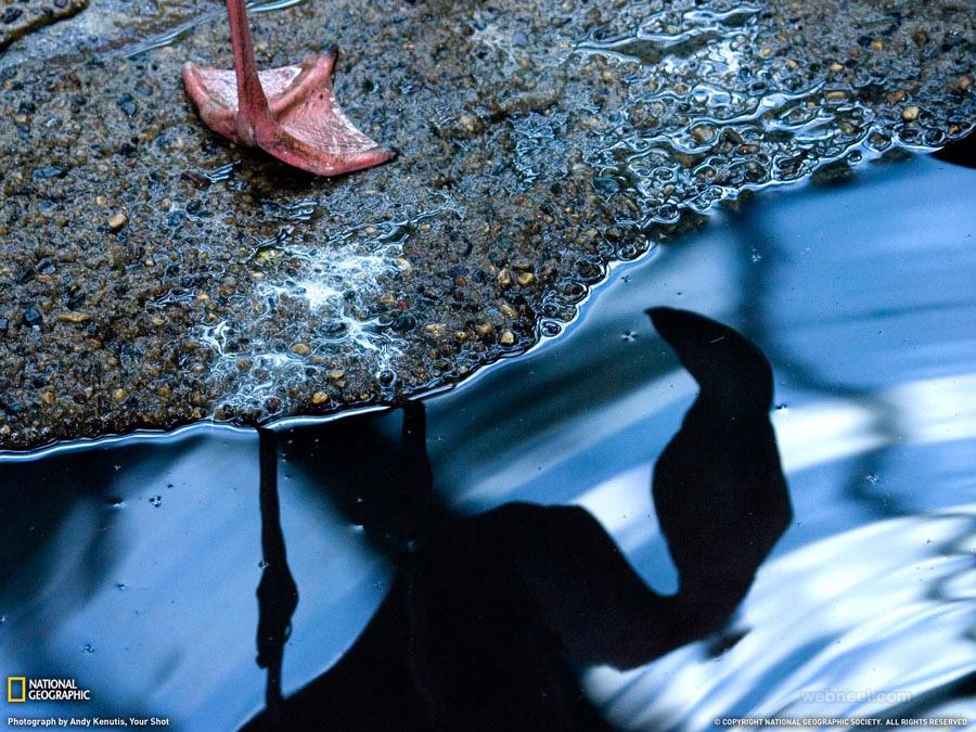 birds reflection photography by kenutis