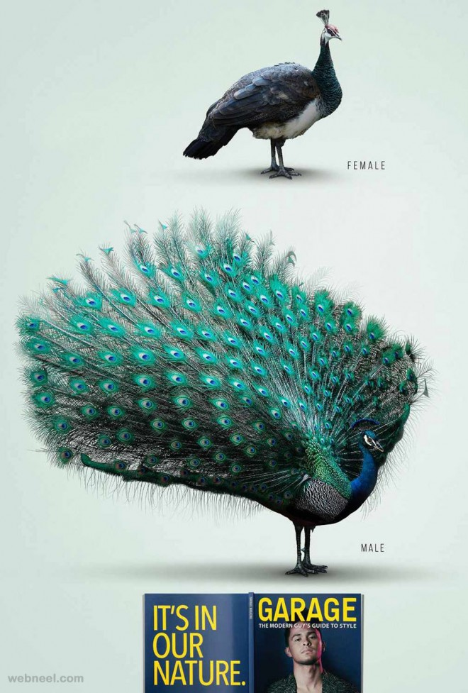 best ads peacock birds magazine