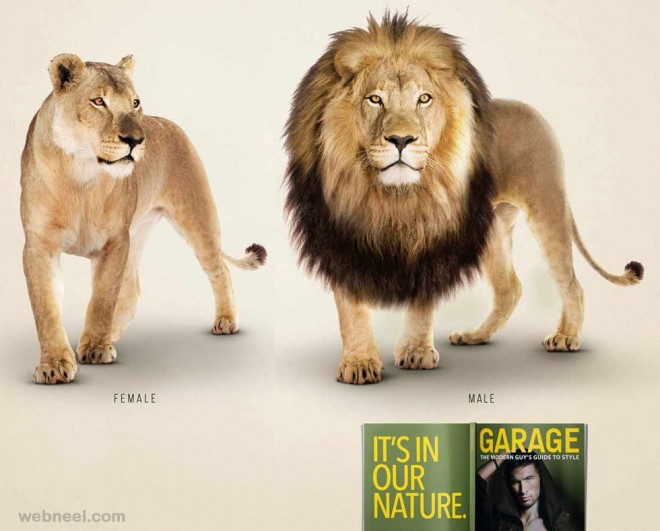 best ads garagelion male lion animals