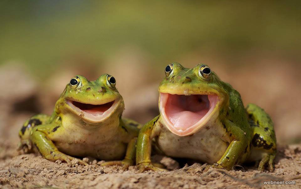 frog wildlife photography