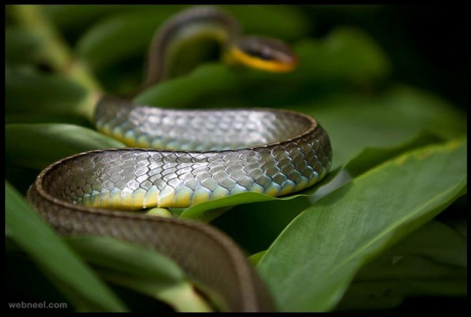 snake wildlife photography by carlos eduardo