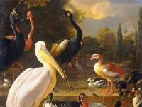 19-bird-painting-by-melchior-dhondekooten
