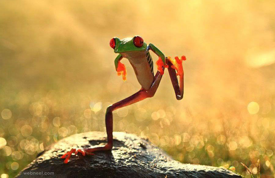 frog jumping wildlife photography