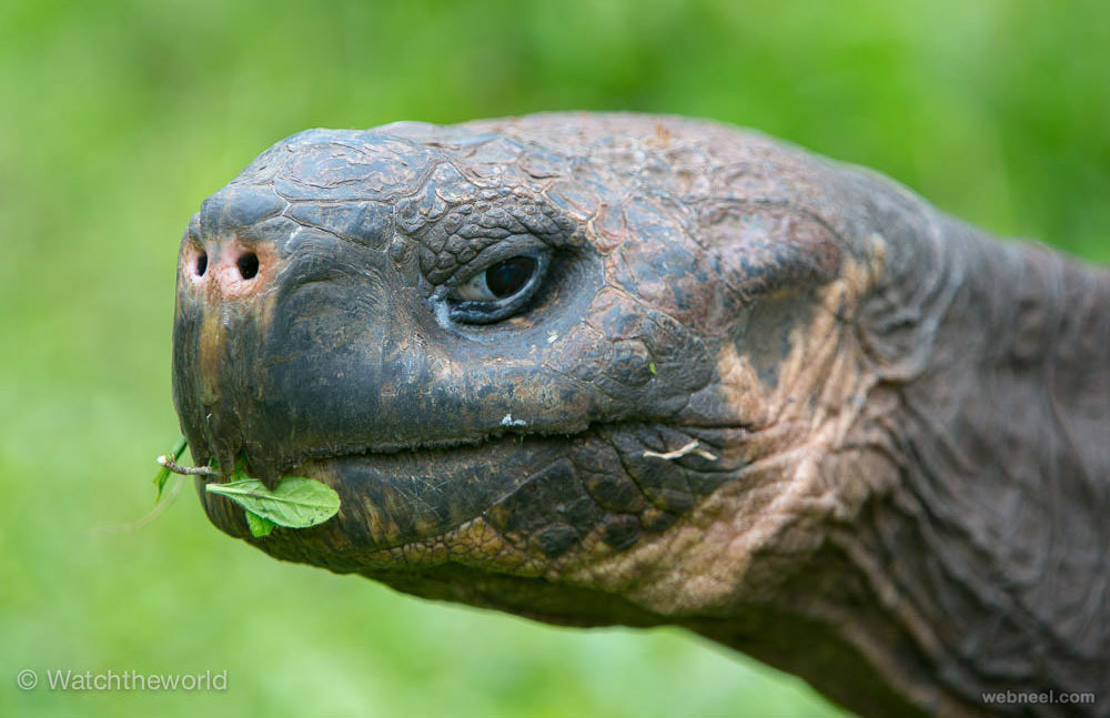 galapagos ecuador wildlife photography by piccaya