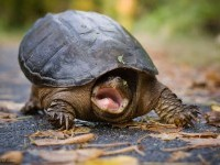 9-tortoise-wildlife-photography