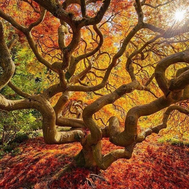beautiful trees by protik hussain