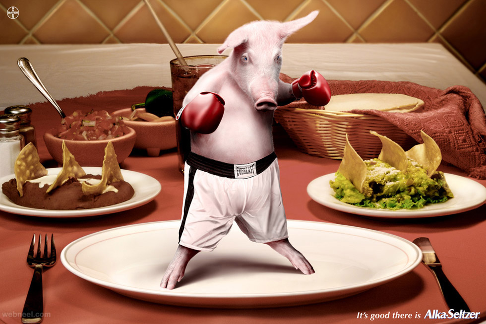 boxer pig creative animal ads alka seltzer
